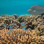 足が届くところでもこんなにキレイな珊瑚と魚たち