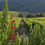 Jardín y viñedos