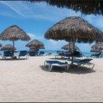 Brezos en la playa