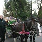 мулы и лошади у входа