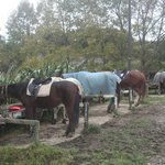 Another photos of the horses resting...