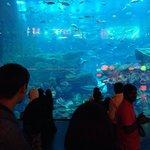 Acquario del Dubai Mall