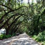 oak canopy near fountain of youth entrance