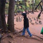 duck feeding
