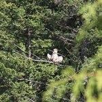 An eaglet prepares for a test flight