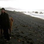 Beach walking with the lamas was fun.
