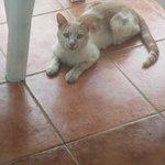 the cat :)))