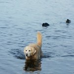 A dog in the lake