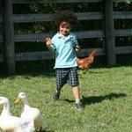 Petting Zoo Fun