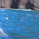 Dolphin excursion near Lanai Island