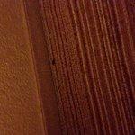 Bugs bugs bugs and a bugged employee