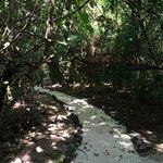 Path for fare's
