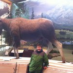 Moose display lower level
