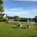 敷地内の池には鴨が