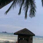 Белый песок , пальма и слоники