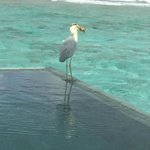 Visitor at out villa pool