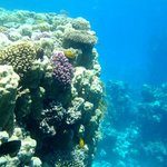 Coral beach, under the sea