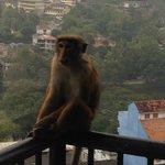 Les macaques !!!