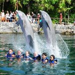 swimming with dolphins at Xel-Ha