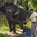 elephant safari...