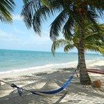 Cool caribbean breeze flow here