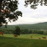Deer grazing at Walpack Inn
