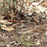snake !!