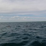 Our good luck to see a school of dolphins from the speedboat!