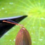 insect on the lily pads