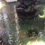 the fish in the water feature