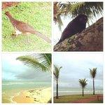 Natureza no resort