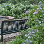 a place to rest among the lacecap hydrangea
