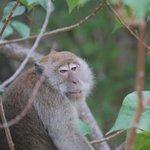 monos de la isla