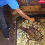10lb Caribbean Lobster