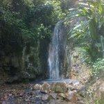 Waterfalls at the Botanical Gardens