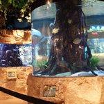 In door aquarium