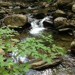 Property Nature Walk through Fairy Glen...