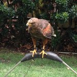 wild bird interaction (sort of)