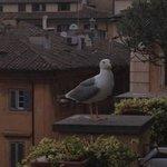 Rooftop Deck Guest