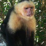 Friend I made at Manuel Antonio Nat'l Park