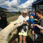 Agrodome Farm Tour
