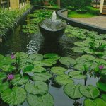 One of the many water lily laden pools