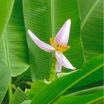 The flower of a palm