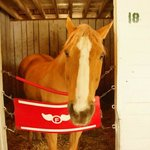 Skippy the Oh so calm lead horse.