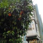 Rua arborizada e com frutas