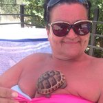 the baby turtle who decieded to pay us a visit while sunbathing,gave him some lettice then hubby
