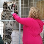 Feed The Tiger Encounter