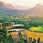 Our beautiful Winelands !!