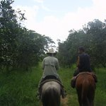 Riding back through the orchard.