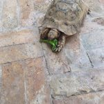 one of the sweet turtles that live here in the gardens